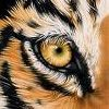 Play Eye of the Tiger