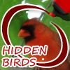 Play Hidden Birds
