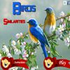 Play Birds Similarities