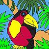 Black parrot on the palm tree coloring